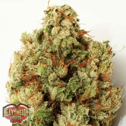 Heavyweight Seeds Green Ninja Feminised Seeds