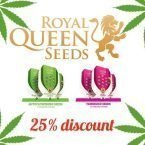 25% off royal queen seeds