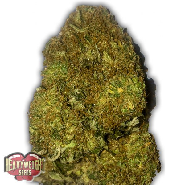 Heavyweight Seeds Auto Skunky Monkey Feminised Seeds