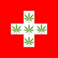 buy cannabis seeds in switzerland