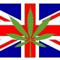buy cannabis seeds in the uk
