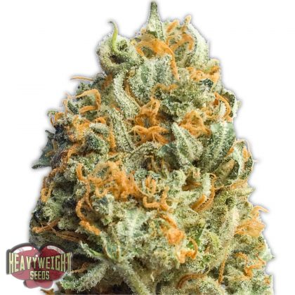 Heavyweight Seeds Fully Loaded Auto female seeds