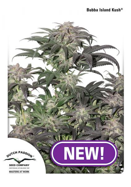 Dutch Passion Bubba Island Kush female seeds