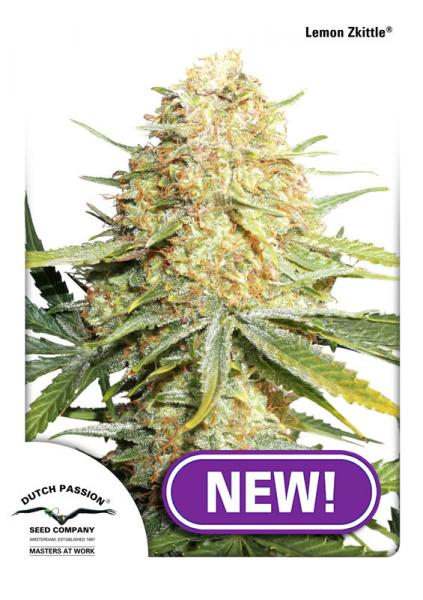 Dutch Passion Lemon Zkittle female seeds