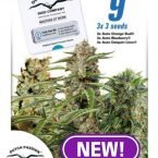 Fruity Auto Mix female seeds