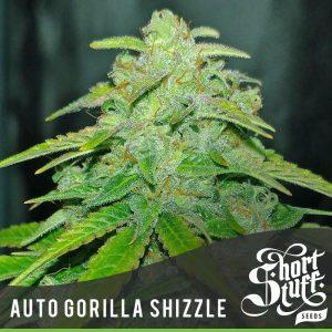 Shortstuff seeds Auto Gorilla Shizzle feminised