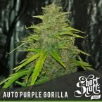 Shortstuff seeds Auto Purple Gorilla feminised