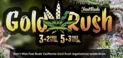 fast buds free seeds promo
