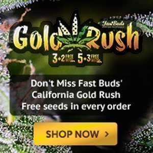fast buds free seeds