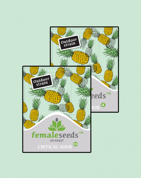 Female seeds Critical Sour