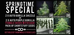 shortstuff free seeds