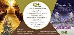ch9 free seeds promo