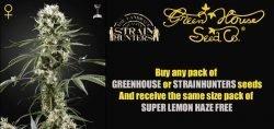 greenhouse free seeds promo