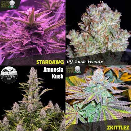 free female cannabis seeds