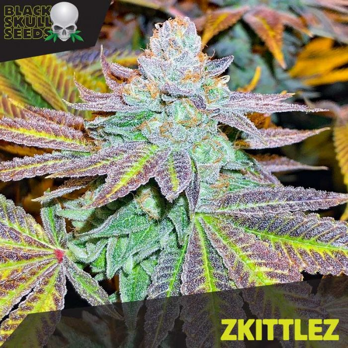Blackskull Zkittlez feminized seeds