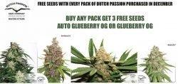 dutch passion free seeds