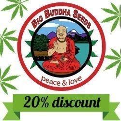 big buddha seeds promo