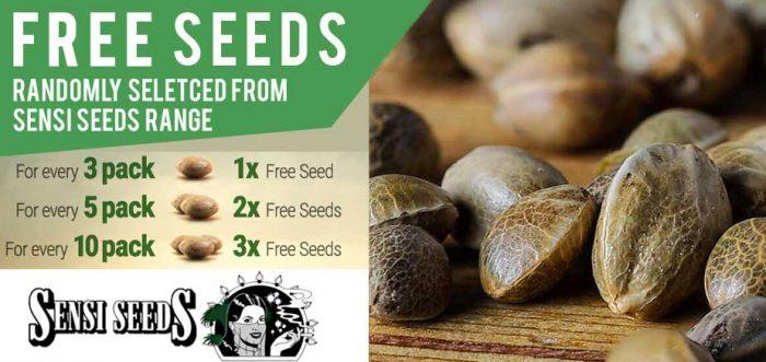 Free sensi seeds