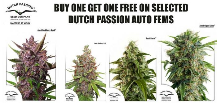 dutch passion free seeds