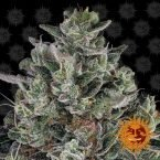 Barneys Farm Glookies feminised seeds