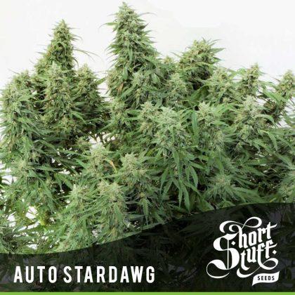 Shortstuff seeds Auto Stardawg feminised