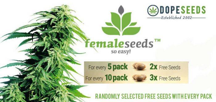 Free female seeds