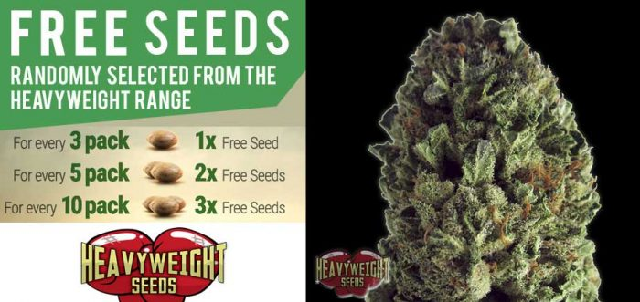 Free heavyweight seeds
