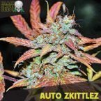 Blackskull Auto Zkittlez feminized seeds