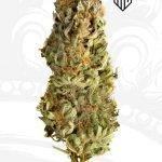 Mega CBD cannabis seeds